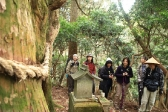 高槻の古木の一つ「天狗杉」の周囲を一周