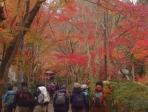 400本のカエデが見事に色づく神峯山寺